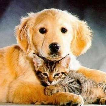 Poes &; hond